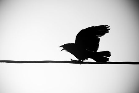 depart: A silhouetted crow sits on a power line and calls out