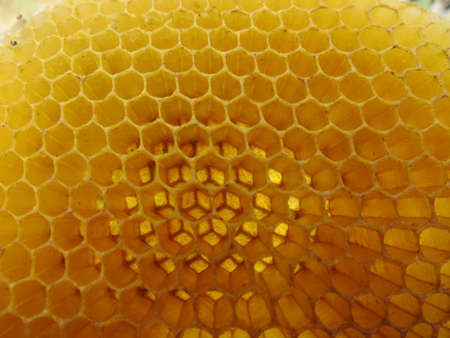 Honeycomb of bee wax.
