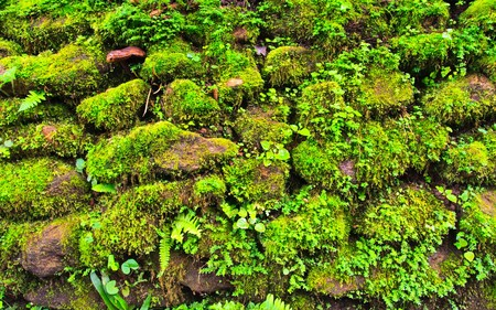 Mosses on the rock Stock Photo
