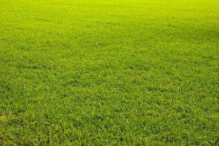 Grass texture (Tilted) Stock Photo - 8072256
