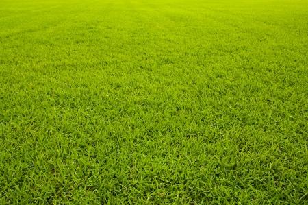 Grass texture (Straight) photo