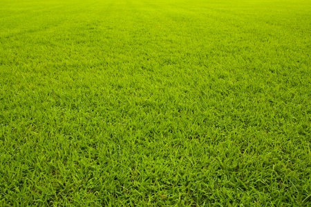 lawn area: Grass texture (Straight)