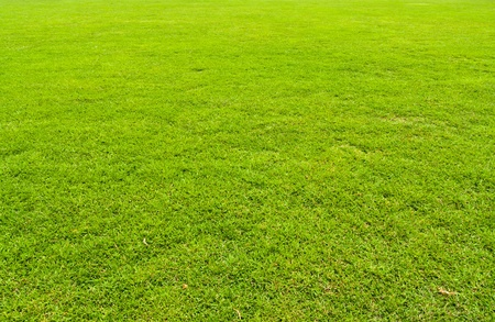 Green grasses yard texture with no pattern Stock Photo - 9251687