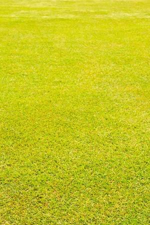 wet green grass texture vertical perspective Stock Photo