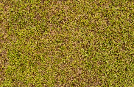 Grass field surface texture can use as background photo