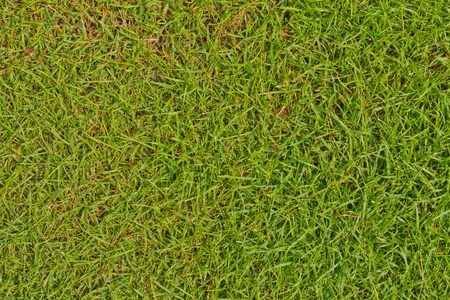 Fresh green grass background texture surface from top photo