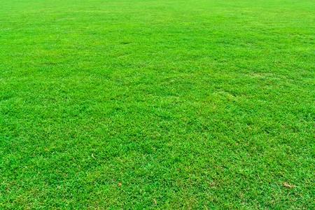 Fresh green grass field background texture Archivio Fotografico