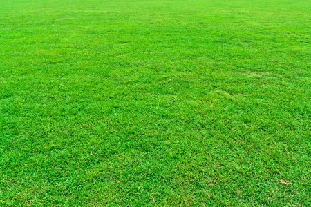 Fresh green grass field background texture photo