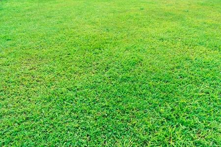 Fresh green grass field background texture Foto de archivo