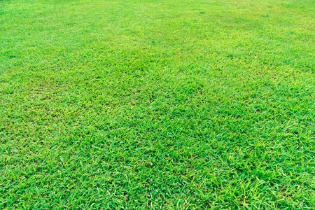 Fresh green grass field background texture Stock Photo
