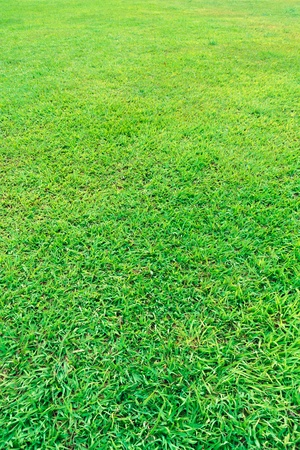 Fresh green grass field background texture 写真素材