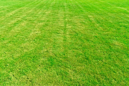 Straight lined pattern green grass field background texture photo