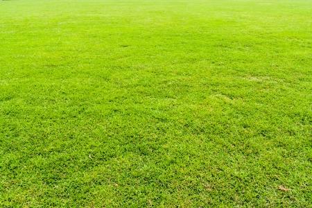 Green grass field seamless background texture