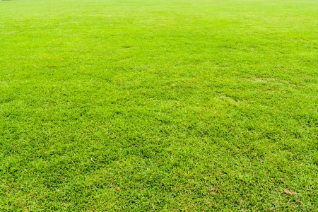 Green grass field seamless background texture