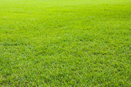 Green grass field seam less background texture photo