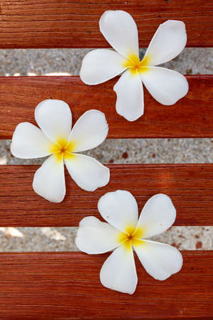 White frangipani flower on brown wood photo