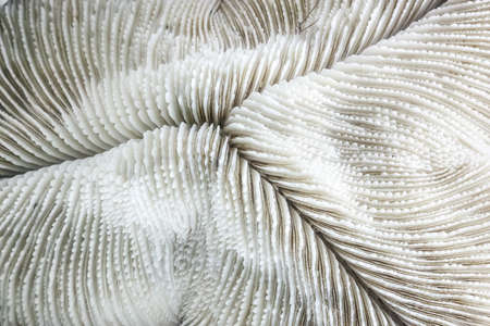 Abstarct pattern of white dead coral close up