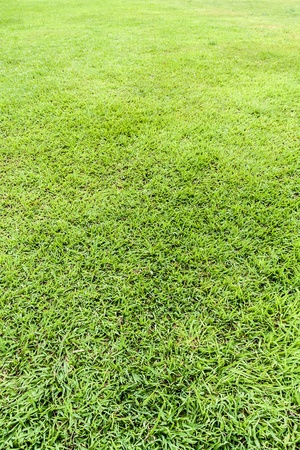 Clear seamless green grass field perspective background photo