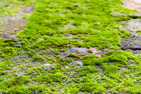 Green moss on the rock close up photo