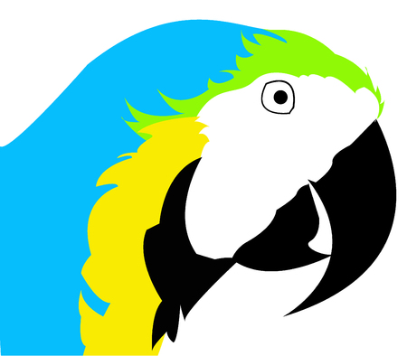 macaw: Blue throated macaw close up vector illustration Illustration