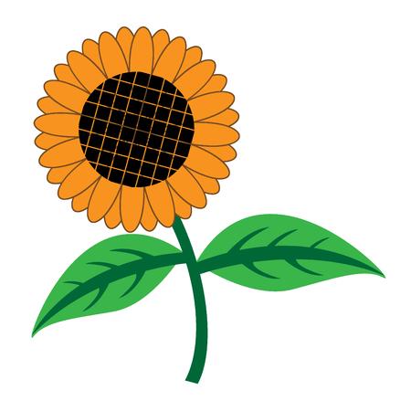 sunflower isolated: Sunflower isolated on white vector illustration