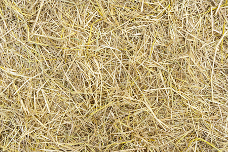 chaff: Pile of dry rice chaff surface texture background