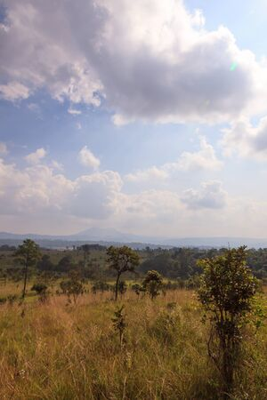 Green savanna forest with cloudy blue sky
