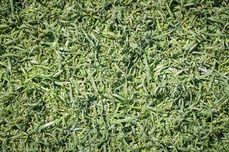 synthetic fiber: Green Fake grass turf surface texture background
