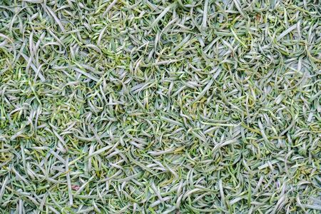 turf: Green Fake grass turf surface texture background