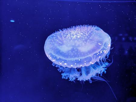 Beautiful  jellyfish glowing under dark blue water