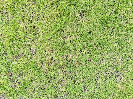 Fresh green grass surface texture  background
