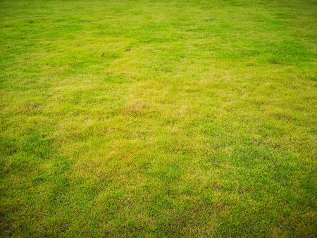 Empty fresh green grass field bakground