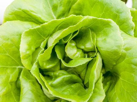 Salad vegetable  green fresh lettuce in farm close up 写真素材