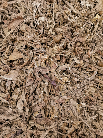 Brown dry cut tobacco leaves texture background