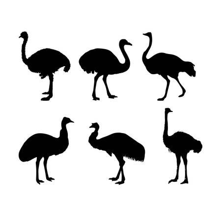 flightless: ostrich silhouette set
