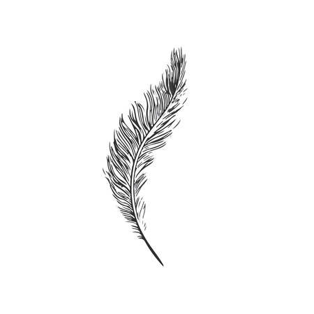 feather vector: feather vector Illustration
