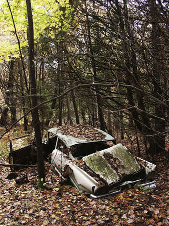 abandoned old car in woods
