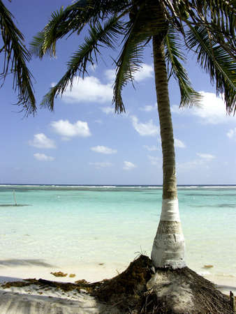 palm tree on beach in caribbean Stock Photo