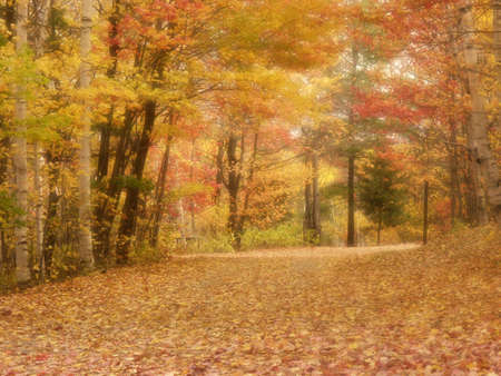 Soft focus fall colours in woods Stock Photo