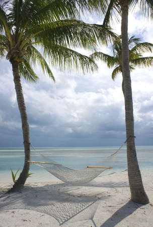 tropical hammock hanging from two palm trees Stock Photo