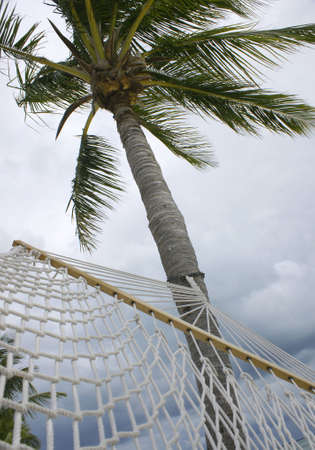 view from hammock hanging in palm tree