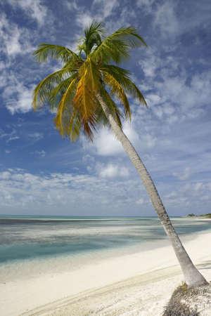 single palm tree on beach leaning towards water