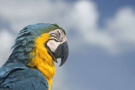 beautiful colourful parrot profile with eyes closed 版權商用圖片