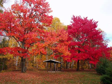 big colourful trees