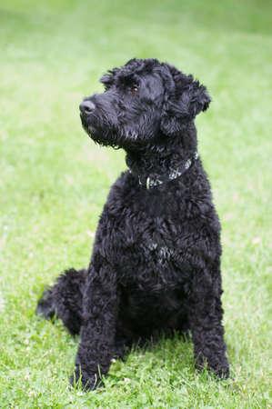 Black dog portrait Stock Photo