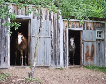 two horses standing in stables