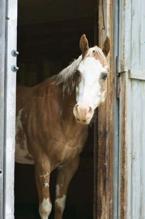 portrait of a horse standing in stable photo