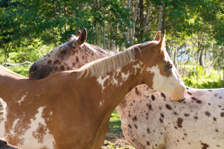two horses scratching each others back
