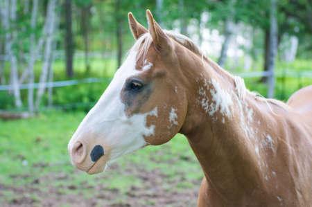 profile: profile of horse head