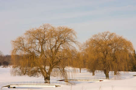 large willow trees and bridges Stock Photo